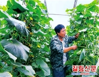 무송현 황가위촌 남새산업으로 경제효익 창출
