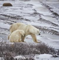<무한도전> 정준하&박명수, 진짜 야생 북극곰의 눈물과 만났다…