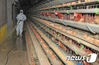 일본, 조류 인플루엔자 확산…대규모 살처분 조치