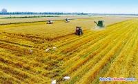 중국 알곡 저장가공 등에서 700억근 알곡 랑비