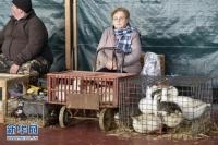 H5N8형 조류독감 전염병 유럽에서 확산