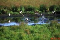 흑룡강 고기곡 국가습지공원, 야생 동식물의 천국