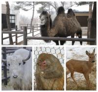 사진으로 보는 연길공원 동물들의 겨울나기