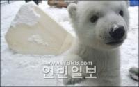"""""""새하얀 눈"""" 처음 본 북극곰과 참대곰"""