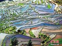 한 폭의 수채화 같은 중국 귀주 계단식 밭의 사계절