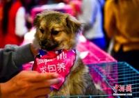 중국 우룸치 '유기동물 입양하는 날', 새로운 주인 기다리는 멍멍이들