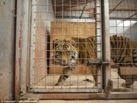 4년동안 약 500마리 동물 죽어나간 '죽음의 동물원'