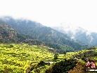 中 가장 아름다운 마을, 피어 오른 운무&만발한 유채꽃
