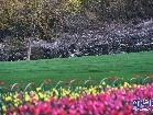 항주: 튤립과 벚꽃 만발