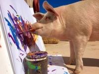 '돼지 화가' 피그카소, 전시회 연다
