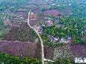 천무의 두견화 '꽃 마을'을 단장