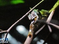 싱가포르 동물원 파충류전시구 재개방