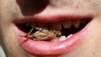 [포토] 귀뚜라미 한번 먹어볼가?...곤충으로 만든 이색 과자 '눈길'