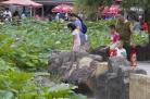 [포토]련꽃 만개한 연길공원, 시민들이 즐겨찾는 휴식장소로..