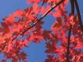 가을향기가 물씬 풍기는 환인 풍림곡