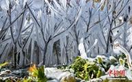감숙 장액: 겨울철 '얼음 옷' 입은 나무들, 관광객 몰이 시작