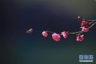 활짝 피여난 매화꽃들 봄기운 듬뿍...