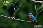 새봄, 고목과 새