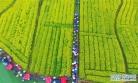 호남 유채꽃 축제 개막