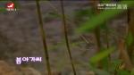 [노래] 봄아가씨-차미령 박연연