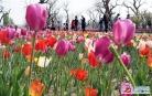 꽃들의 향연
