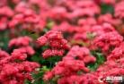항주 정원…월계화 꽃내음 가득