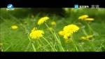 [요청한마당]민들레 꽃언덕-김문우