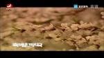 [요청한마당] 축배원무곡-안룡수 마복자