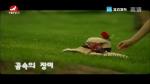 [요청한마당] 꿈속의 장미-박은화