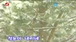 [매주일가 2019-1-7] 첫눈이 내리네 - 로애란