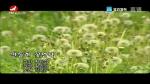 [요청한마당] 민들레 꽃언덕 - 김문우
