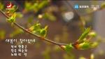 [요청한마당]새봄이 찾아왔네-리란