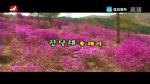 [요청한마당] 진달래 축제가 - 김지협 박경숙
