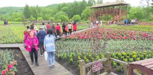 중국 돈화 2019 대석두아광호 제3회 타래붓꽃문화관광축제 개막