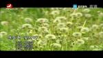 [요청한마당] 민들레 꽃언덕-김문우