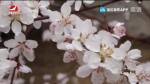 [요청한마당]눈꽃나라-리진화