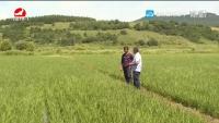 왕청, 우리 주 첫 말린채농업산업화련합체 설립