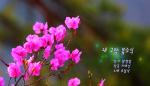 [라지오 매주일가MV]내 고향 봄소식