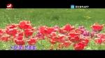 [요청한마당]나리꽃-구련옥