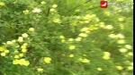 독창 <유치원 꽃밭에>, 작사: 남세풍, 작곡: 김정송, 노래: 김향림, 지도: 박해연