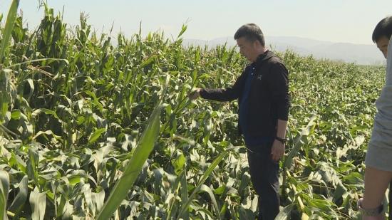 [영상뉴스]우리 성 태풍피해농작물 수확기계구매보조금 발급 예정