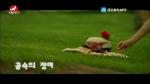 [요청한마당]꿈속의 장미-박은화