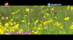 [요청한마당] 작은 꽃 한송이 -  안룡수 마복자